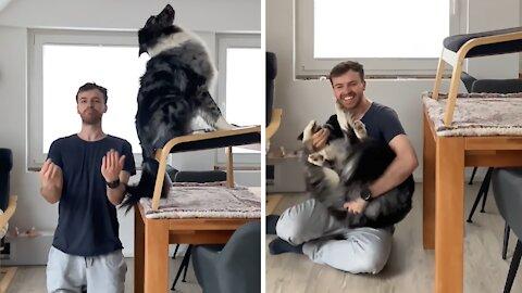 Australian Shepherd performs flawless trust fall