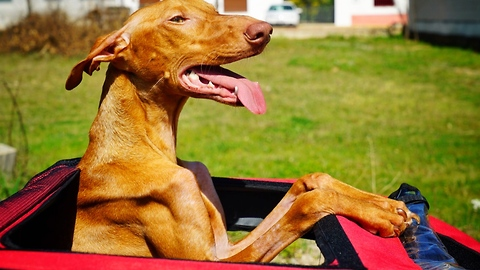 AMAZING DOG THAT INSPIRED A COUNTRY GOES ON A LAST RIDE. INCREDIBLY EMOTIONAL