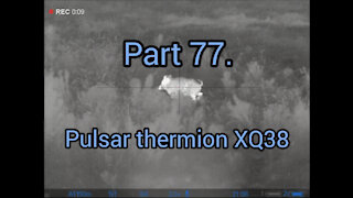 Part 77. Wildboar hunting, pulsar thermion xq38