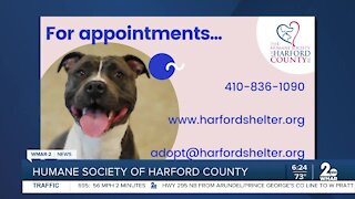Clear the Shelter adoption event August 23-31 at the Humane Society of Harford County