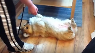 This Compilation of Playful Puppies Will Brighten Your Day