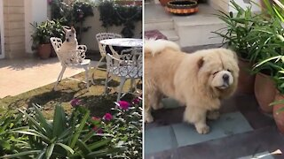 Pup sees dog eating plants, joins in on the fun