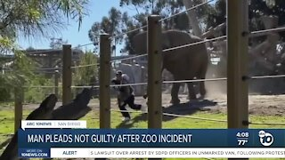 Man who snuck into Elephant enclosure at San Diego zoo pleads not guilty