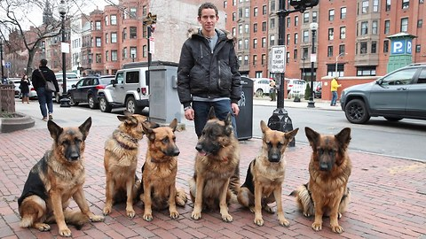 Dog Whisperer Walks Pack Of Dogs Without A Leash