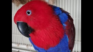 False stolen parrot story could have sent innocent man to prison, sheriff's office says