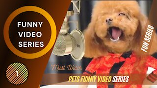 Best Funny Video Series