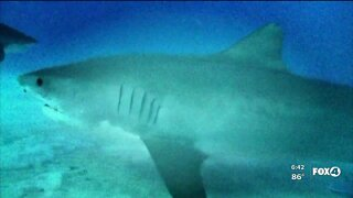 SCCF launches shark conservation campaign