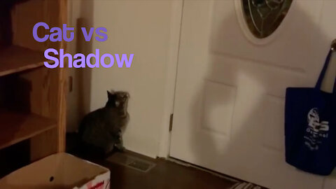 Cat vs. Shadow - Starring Zeus the Cat