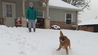 Rescue dog First Time Southern Snow Storm!