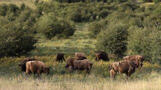 World Sees Sharp Wildlife Decline