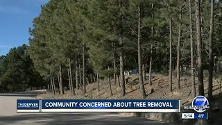 Community concerned about tree removal
