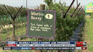 Murray Family Farms hiring for summer season