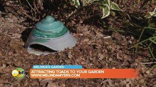 Melinda's Garden Moment - attracting toads to your garden