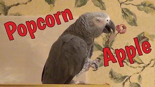 Generous Parrot Offers Owner Various Snacks