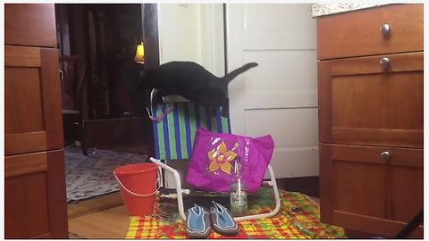 Cat gets literal jump start on Summer
