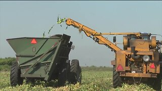 Florida farmers continue food production during Coronavirus outbreak