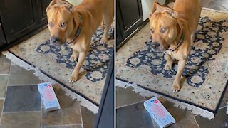 Guilty dog caught red-pawed stealing owner's lunch