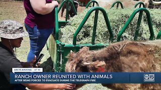 Ranch owner reunited with animals after Telegraph Fire