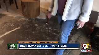 Deer crashes into house, but insurance won't cover damage