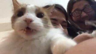 Cat paralyzed with fear at having toenails cut