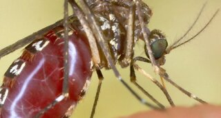 West Nile virus making first appearance this season in Clark County