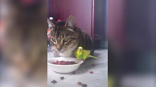 Bird and Cat Share Lunch