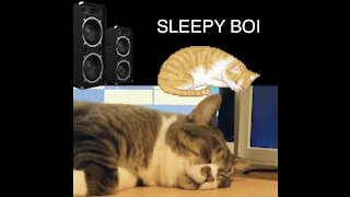 This Cat Can Sleep Through Anything