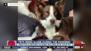 Pets being alone during the pandemic, practice a return to work routine with your pet