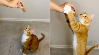 Kitty cat chomps down on treat in slow motion