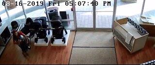 Women accused of stealing strollers