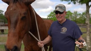 Horses helping veterans reduce stress, escape isolation