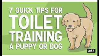 Dog toilet training