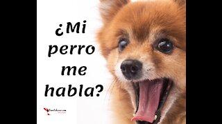 Perro habla