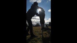 """Australian Shepherd creates """"eclipse"""" while jumping through owner's arms"""
