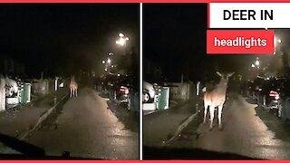 Moment a massive deer was caught in headlights