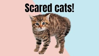 Scared Cats!