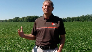 Ohio farmers wait to see impact of China soybean tariffs