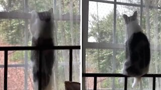 Cat sits on windowsill to watch the birds