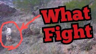 Dog attacks puma!! What a fight 😱😱 don't lose..