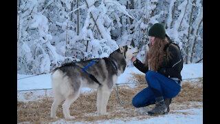 Huskies Dog Sledding with Pickup and Photos Service in Fairbanks, Alaska