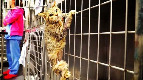 Amazing cat loses a leg, then something EPIC happens