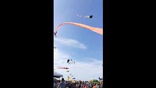 festival papagaios