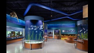 South Florida Science Center and Aquarium announces reopening plan