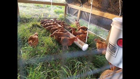 Whitworth Family Farms Intro