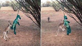 Kangaroo Fights T-rex In Amusing Viral Video