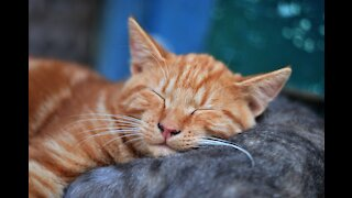 Adorable cat trying to sleep happily