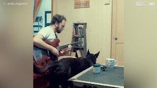 Il cane che vuole diventare un cantante!