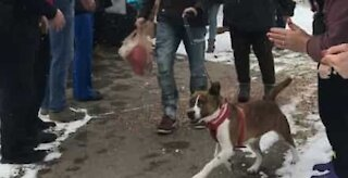 Un superbe au revoir pour cette chienne adoptée après 500 jours