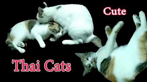 Cute!! Thai Cats.