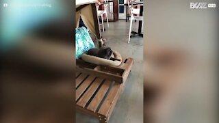 Gato tem ataque de espirros cómico